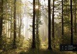 AG Design Fotobehang Bos FTS0181_