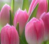 Dutch DigiWalls Fotobehang 70031 Tulpen_
