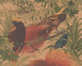 AS Creation Faro 3 behang 6954-37 Paradijsvogels