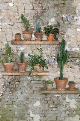 Bakstenen Vlies met Cactussen Fotobehang INK7001