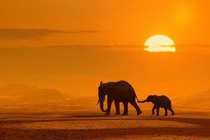 Dutch DigiWalls Fotobehang 70001 Olifanten bij zonsondergang (Klein)