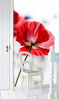 Esta Home Ginger behang PhotowallXL red poppy 158003