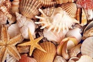 Dutch DigiWalls Fotobehang 70008 Zeeschelpen