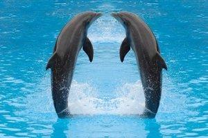 Dutch DigiWalls Fotobehang 70009 Dolfijnen