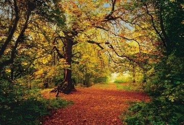 Komar Fotobehang Autumn Forest