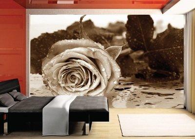 AG Design Fotobehang Roos Sepia FTS0086