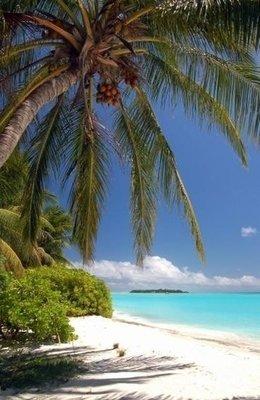 Dutch DigiWalls Fotobehang 70024 Tropisch strand