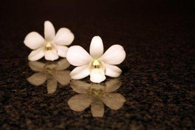 Dutch DigiWalls Fotobehang 70069 Orchidee
