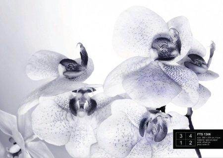 AG Design Fotobehang Orchidee?n FTS1306