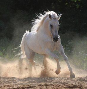 Dutch DigiWalls Fotobehang 70065 Paard