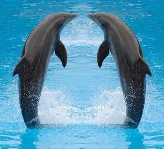 Dutch DigiWalls Fotobehang 70018 Dolfijnen