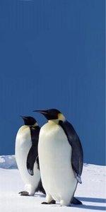 Dutch DigiWalls Fotobehang 70027 Pinguins